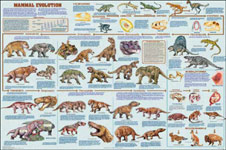 Mammal Evolution Poster