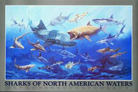 Sharks of North American Waters Click to zoom in