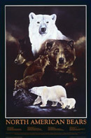 North American Bears poster